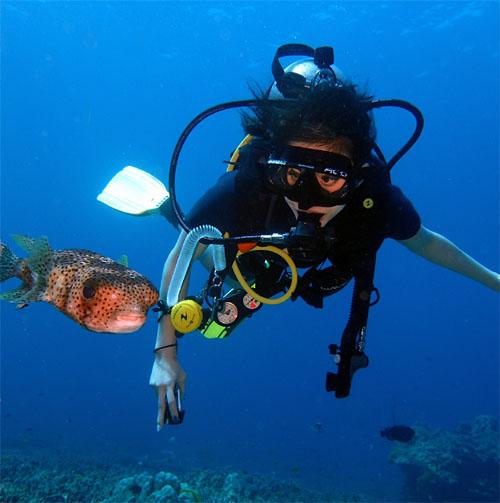 グリーンダイバープーケット 体験ダイビング