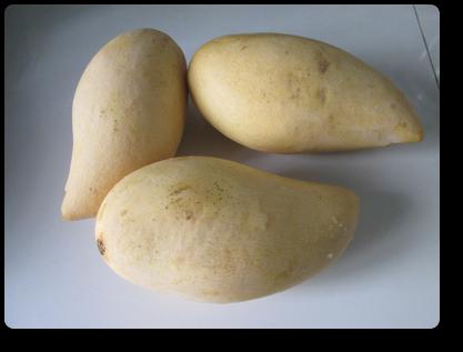 プーケット産のマンゴー