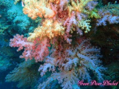 岩肌を覆うカラフルなサンゴ