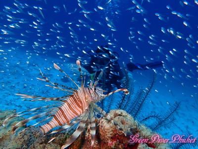 プーケット ラチャノイ島ラチャヤイ島 ファンダイビング イメージ写真