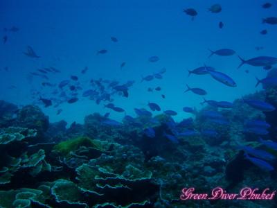 プーケット ダイビングポイント ラチャノイ島