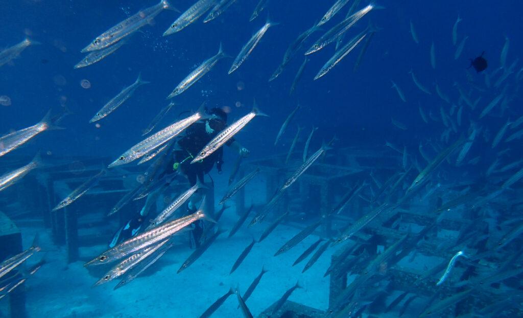 プーケット 体験ダイビング ラチャヤイ島 カマスの群れ